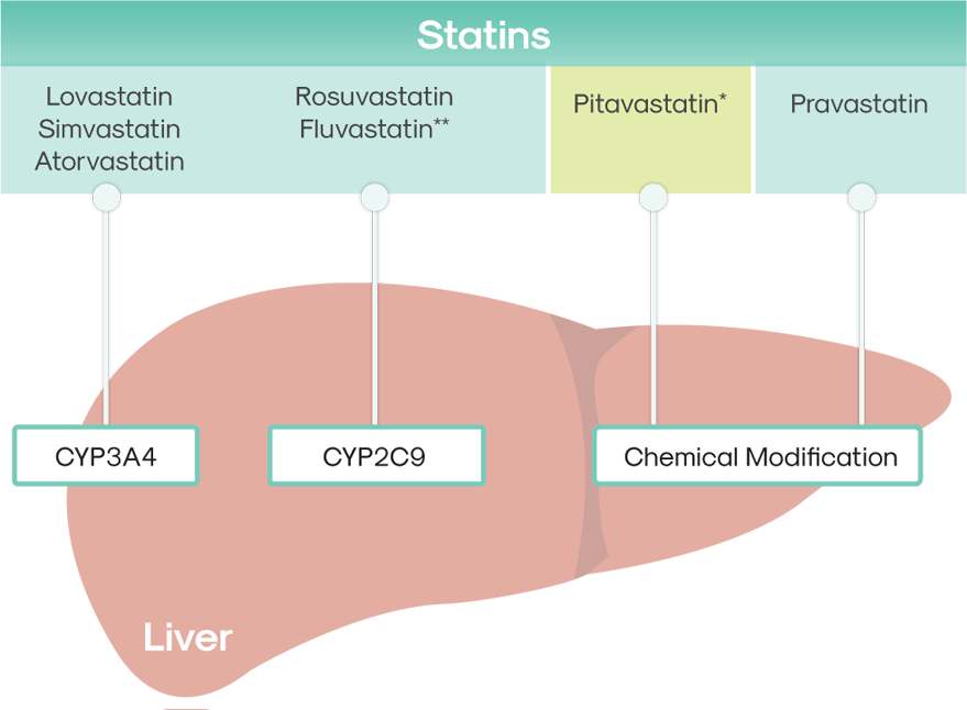 Centro de niños Ruina Escalera  Metabolism & Processing | Zypitamag™ (pitavastatin) tablets